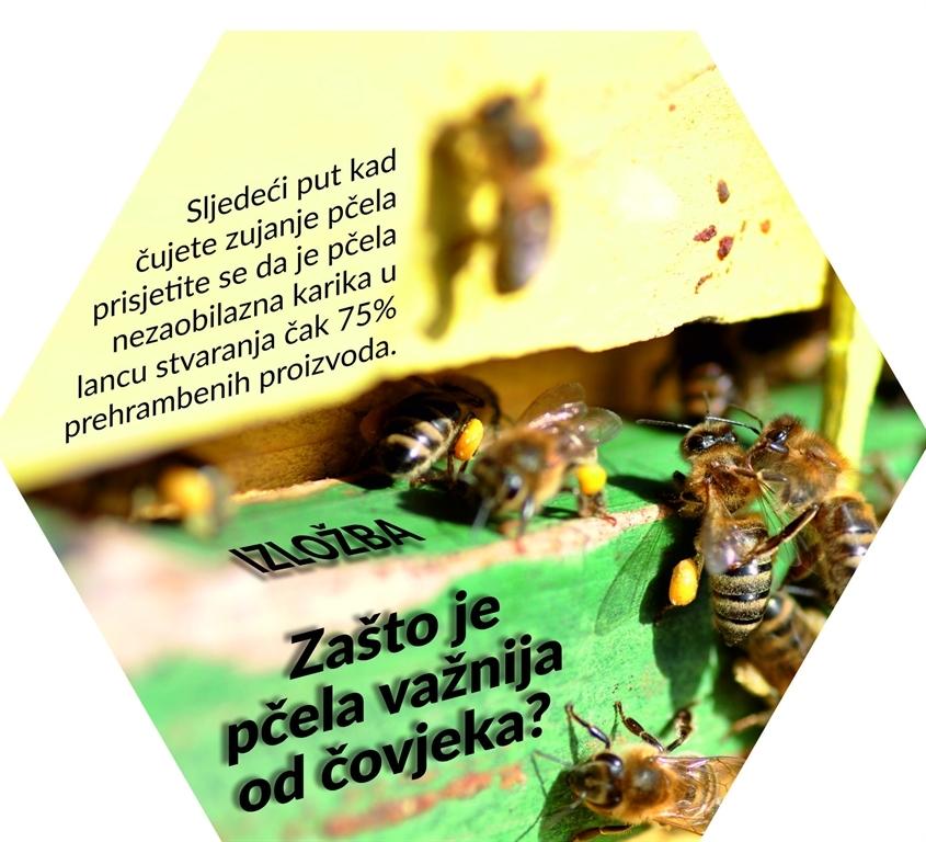 Izložba 'Zašto je pčela važnija od čovjeka?' u Kutini